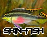 Skin-Fish