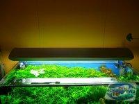 iluminarea-acvariului