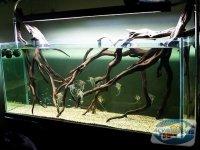 amenajarea-acvariilor