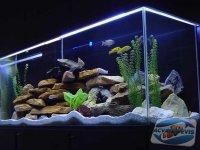 apa-acvariului
