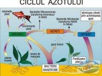 ciclul-azotului-in-acvariu
