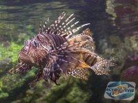 pericolele-acvariilor-marine