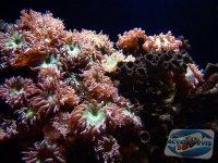 popularea-acvariului-marin
