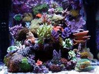 echipament-esential-acvariului-marin