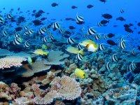 reciful-de-corali