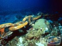 recifurile-de-corali-sunt-in-pericol