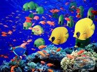 scufundari-in-marea-rosie-egipt