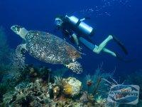 scufundari-in-caraibe