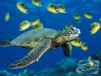 scufundari-in-marea-bariera-de-corali