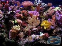 iluminarea-unui-acvariu-marin