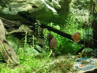 racirea-apei-acvariului
