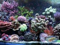 tipuri-de-acvarii-marine