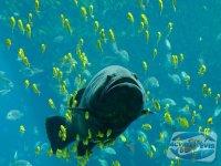 acvariul-dulcicol-si-acvariul-marin