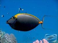 de-ce-mor-pestii-intr-un-acvariu-marin