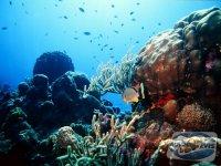 mutarea-unui-acvariu-marin-mutarea-in-noua-locatie