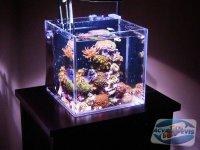 acvariul-nano
